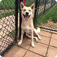Adopt A Pet :: River (fostered in TX) - Cranston, RI