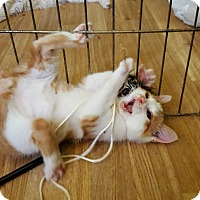 Adopt A Pet :: Paddy O'Guinness - Delmont, PA