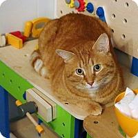 Adopt A Pet :: Julius - Athens, GA