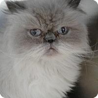 Adopt A Pet :: Molly - Jackson, NJ