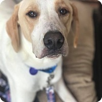 Adopt A Pet :: Riley - Atlanta, GA