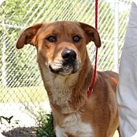 Adopt A Pet :: Sam Hunt - Greensboro, NC
