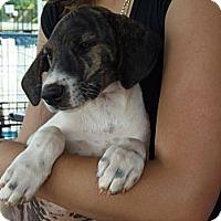 Adopt A Pet :: Mollie - Fort Valley, GA
