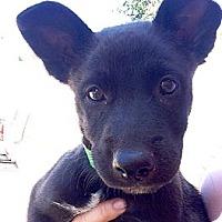 Adopt A Pet :: KIRA - Inglewood, CA