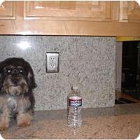 Adopt A Pet :: Cooper - Rescue, CA