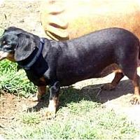 Adopt A Pet :: Spike - San Jose, CA