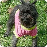 Adopt A Pet :: GRETCHEN - ADOPTION PENDING - Mesa, AZ