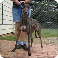 Adopt A Pet :: Tara - Oak Ridge, NC