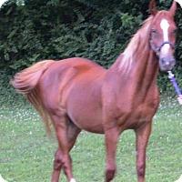 Adopt A Pet :: Scooter - Waleska, GA