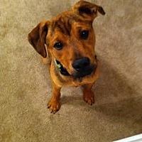 Adopt A Pet :: Phoenix - Richfield, WI