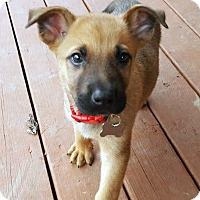 Adopt A Pet :: Jolly-Adopted! - Detroit, MI
