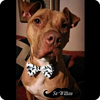 Adopt A Pet :: Willie LOOK! - Des Moines, IA
