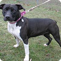 Terrier (Unknown Type, Medium) Mix Dog for adoption in New Kensington, Pennsylvania - Diamond