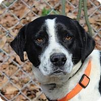Adopt A Pet :: Buckshot - Harrisonburg, VA