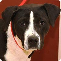 Adopt A Pet :: Inkblot - McDonough, GA