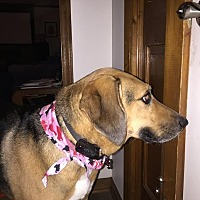 Adopt A Pet :: Dixie  ~courtesy listing~ - Thomasville, NC