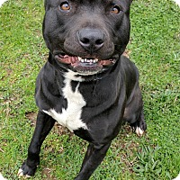 Adopt A Pet :: Pax - Lisbon, OH