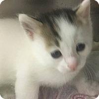 Adopt A Pet :: Charlie - Springdale, AR