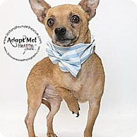 Adopt A Pet :: Bode~Adopted!! - Troy, OH