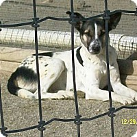 Adopt A Pet :: Drew - Mexia, TX