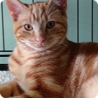 Adopt A Pet :: Poncho - Monroe, GA