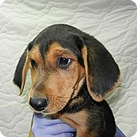Adopt A Pet :: Sneezy - South Jersey, NJ