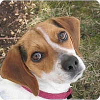 Adopt A Pet :: Finesse - Blairstown, NJ