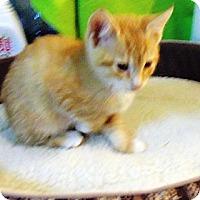 Adopt A Pet :: Gizmo - Catasauqua, PA