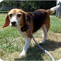 Adopt A Pet :: Buttercup - Indianapolis, IN