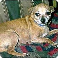 Adopt A Pet :: Misty - dewey, AZ