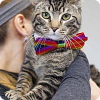 Adopt A Pet :: Axle - Colorado Springs, CO
