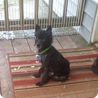 Adopt A Pet :: Woof - conroe, TX