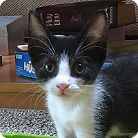 Adopt A Pet :: Angus & Norm - Southington, CT