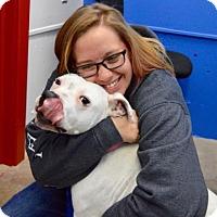 Adopt A Pet :: Ginger - Buena Vista, CO