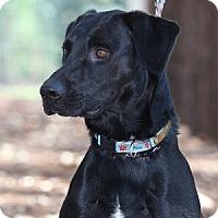 Adopt A Pet :: Hershey - Minneola, FL