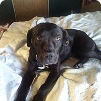 Adopt A Pet :: Oscar - Knoxville, TN