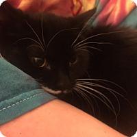 Adopt A Pet :: Ashley - Warren, MI
