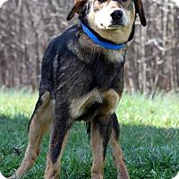 Adopt A Pet :: Caine - Waldorf, MD