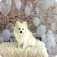 Adopt A Pet :: Orion - Dallas, TX
