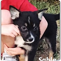 Adopt A Pet :: Sable - DeForest, WI