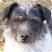 Adopt A Pet :: Peter - Mocksville, NC