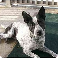 Adopt A Pet :: Lizzy - Mocksville, NC