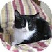 Adopt A Pet :: Miss Tux - Vancouver, BC