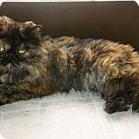 Adopt A Pet :: Precious - Beverly Hills, CA