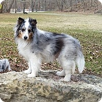 Adopt A Pet :: Rascal (Adopted) - Pittsburgh, PA