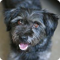 Adopt A Pet :: Chico - Canoga Park, CA