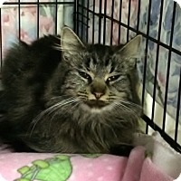 Adopt A Pet :: Yasmina - Byron Center, MI