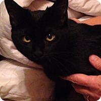 Adopt A Pet :: Winnie - Bentonville, AR