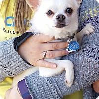 Adopt A Pet :: Ren - Louisville, KY - Dayton, OH