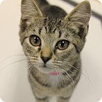 Adopt A Pet :: Madison - Medina, OH